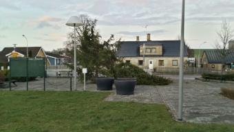 Gran knäcktes i stormen Svea